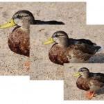 ImageMagick: Cambiar tamaño y formato de fotos en lote con convert